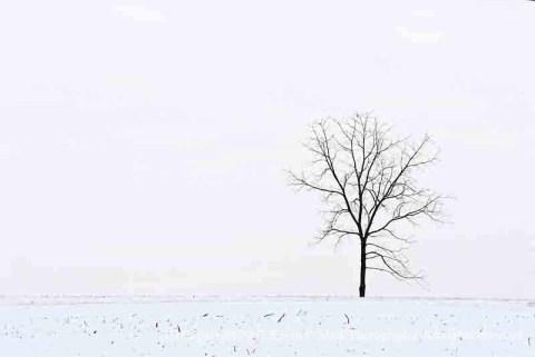 Single tree in snowy field