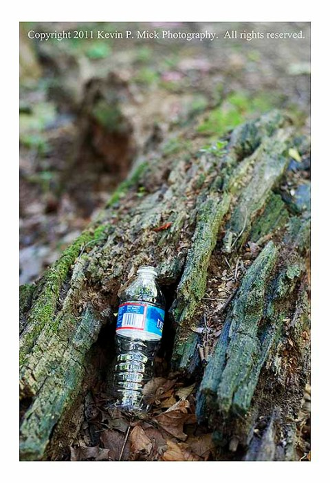 Empty water bottle left in a downed tree