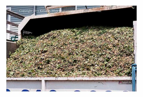 Wood chips ready for disposal