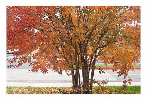 Autumn tree outside window