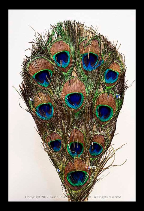 Peacock feather portrait