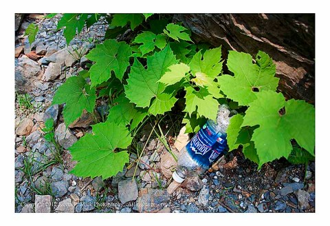 Plastic bottle and vine