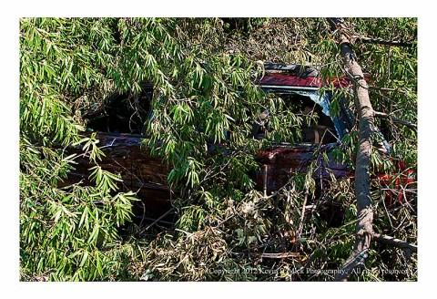 Car crushed by fallen tree limb