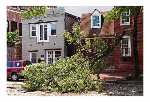Fallen tree in Fells Point