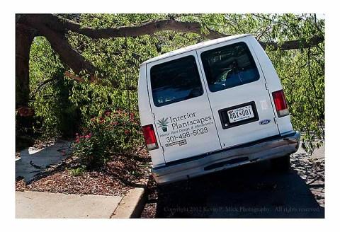 Van crushed by fallen tree limb