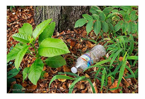 Plastic bottle dropped in leaves