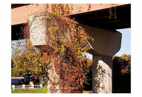 Highway overpass and vines