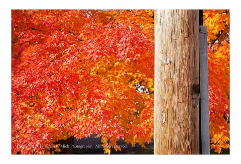 Telephone pole and autumn leaves