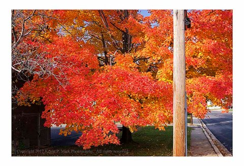 Telephone pole and autumn leaves