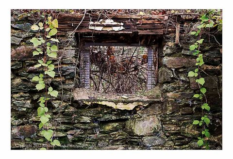 Vines surrounding window of abandoned foundation