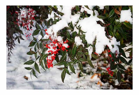 Red berries and white snow