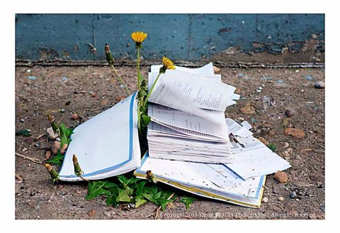 Thrown away text book blowing in the wind.