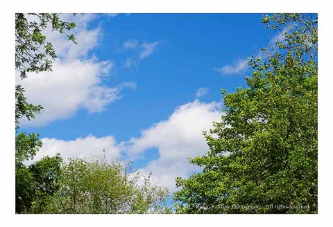 Blue sky, green leaves, and white clouds on a spring day.