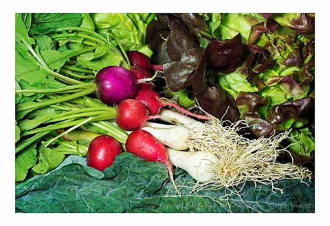 A still life of fresh lettuces, radishes, and garlic.