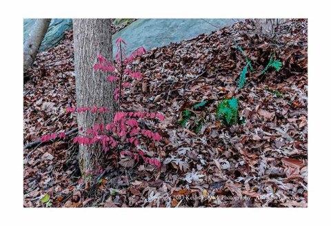 Various leaves in fall.