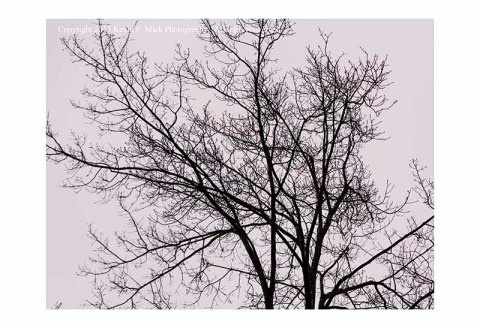 Single bare tree on cloudy day.