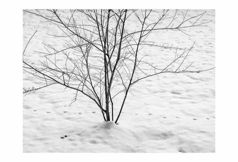 Single tree with footprints in snow