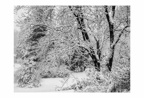 Tree in active snowstorm