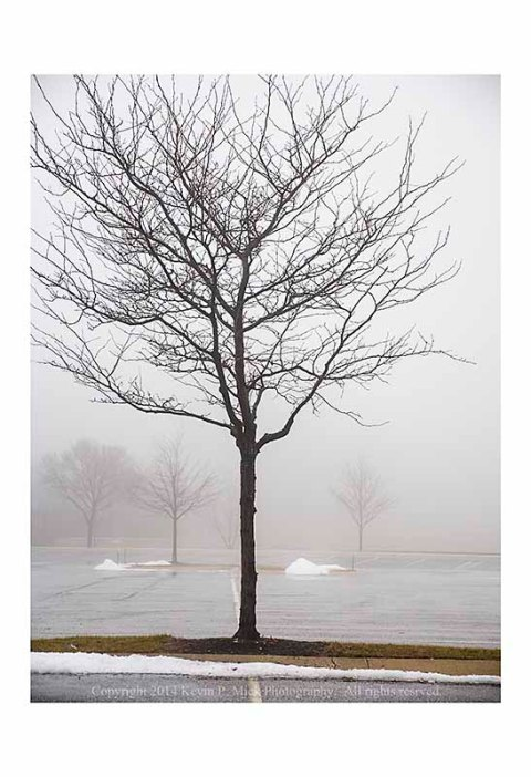 Tree in parking lot on a foggy day.