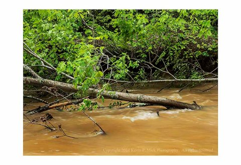 Downed tree after heavy rains flooded Morgan Run.