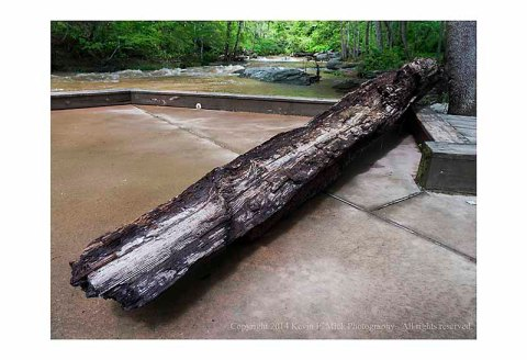 Beached log on concrete pier at Morgan Run following heavy rain.
