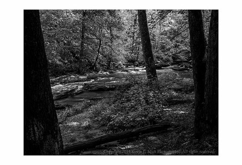 B&W image of Morgan Run as seen through the trees.