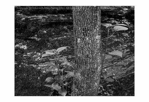B&W image of a tree trunk and some leaves against a rock background.