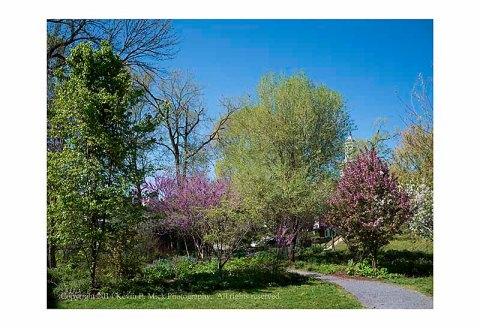 Various trees in Shepherdstown during Spring bloom.