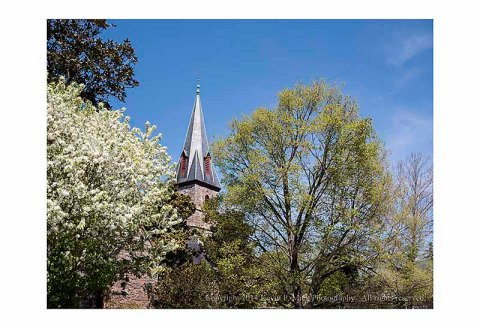 Church steeple surrounded by trees blooming in Spring.