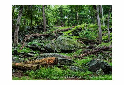 Catoctin Mountians near Cunningham Falls showing the rocks, trees, downed trees, and grasses.