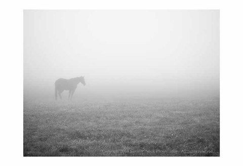 BW photo of a lone horse standing in a field on a foggy morning.