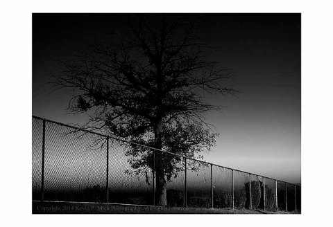 BW photograph of a tree and fence at sunrise.