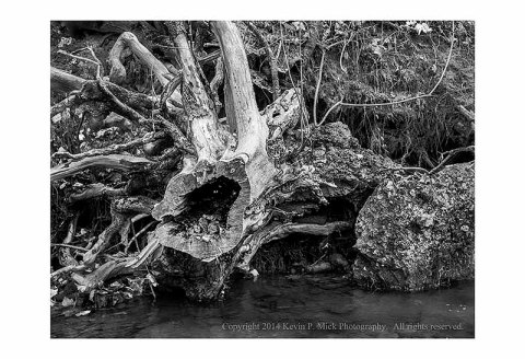 BW photograph of a knarled tree stump on the bank of a stream.