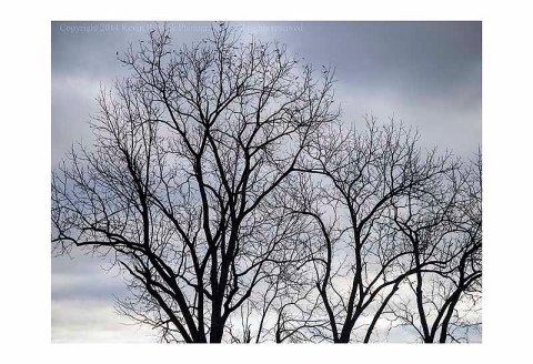 Bare tree branches on a cold, windy, autumn morning.