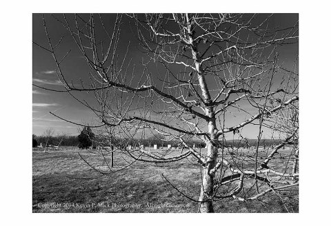 BW photograph of the trees in the Peach Orchard in Gettysburg, PA.