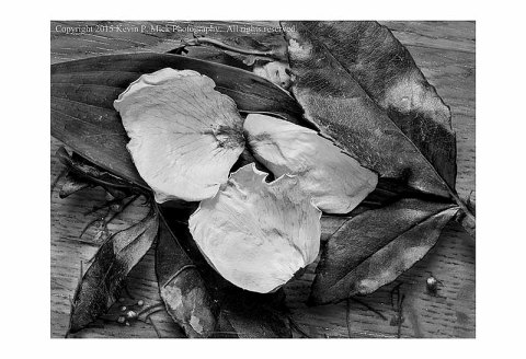 BW photograph of petals and leaves that had fallen and were swept into a pile.