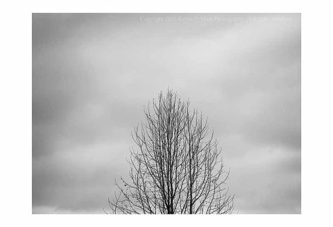 BW photograph of a single tree centered against an overcast sky.