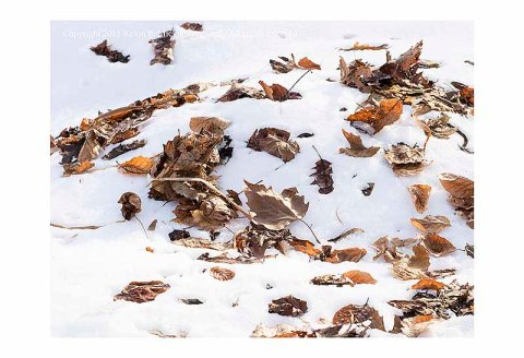 Autumn leaves that a laying across a snow bank.