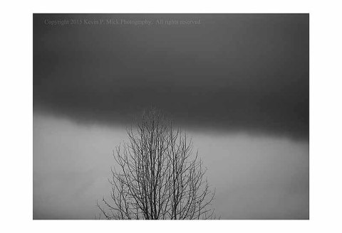 BW Photograph of a tree with a storm cloudline overhead.