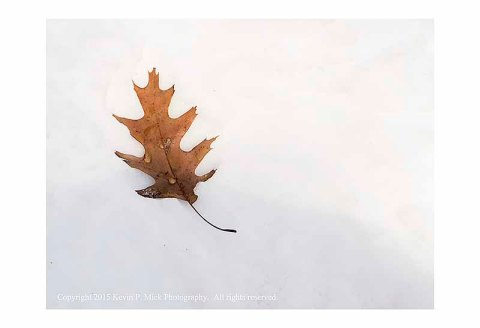 Leftover fall oak leaf laying on a snow bank.