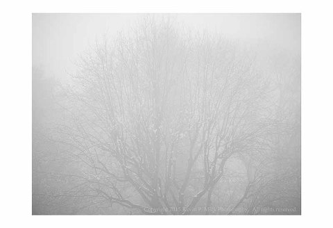 BW photograph of a distant tree with snow in the fog