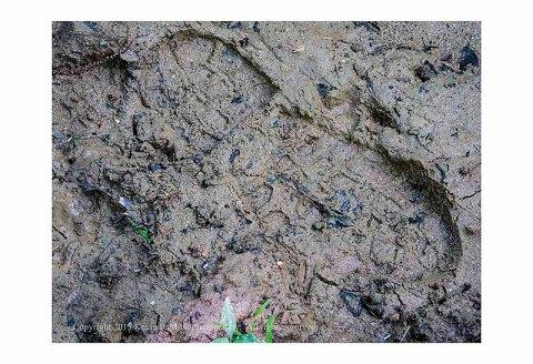Bootprint in mud