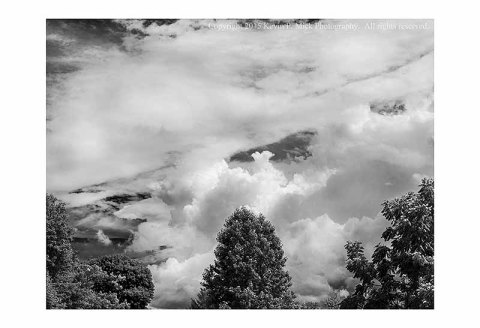 BW photograph of three trees with storm clouds building overhead