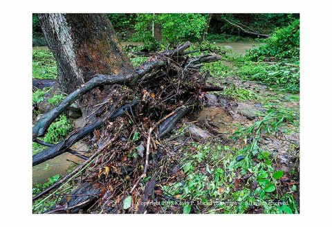 Wooden debris against a tree from recent flooding at Morgan Run
