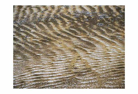 Ripples in mud flats from recent flooding at Morgan Run