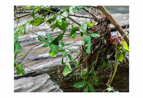 Debris caught in tree branch after Morgan Run flooding