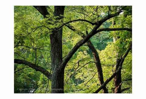 Morgan Run trees with sunlight