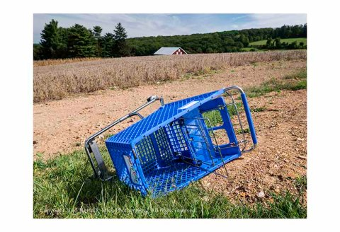 Abandoned shopping cart near a cornfield