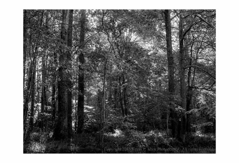 BW photograph of backlit trees in bright sunlight
