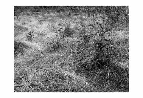 BW photograph of the grassy field beside Devils Den in Gettysburg, PA.